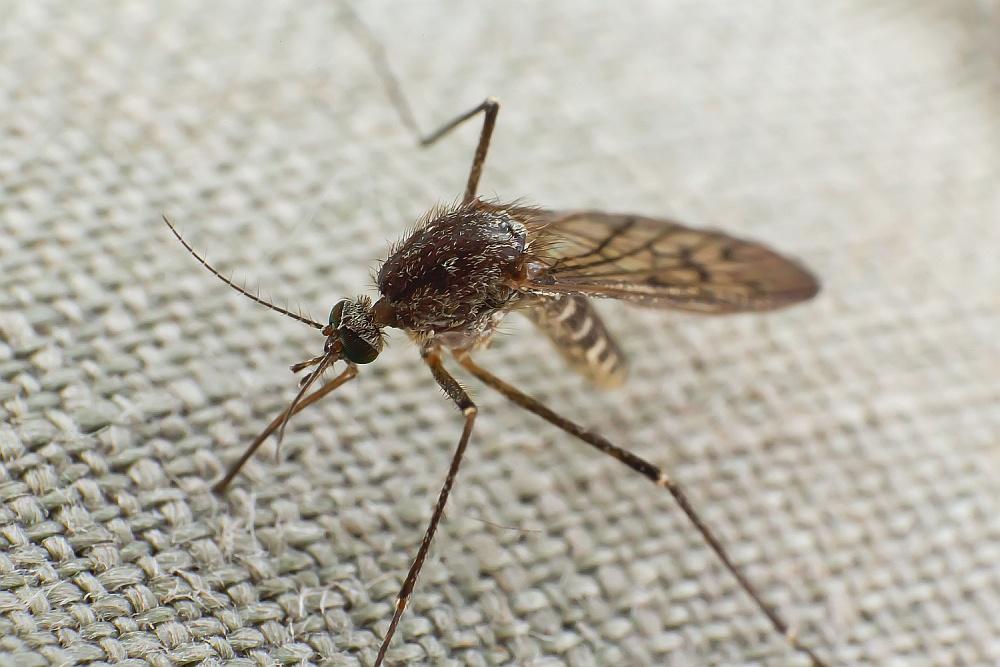 Lato – okres walki z komarami!